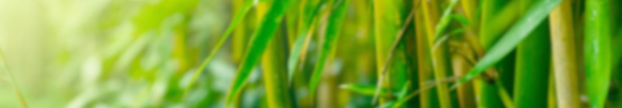 header_nachhaltigkeit